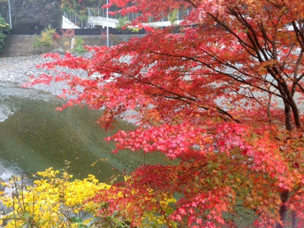 秋の景色を指先に閉じ込めて