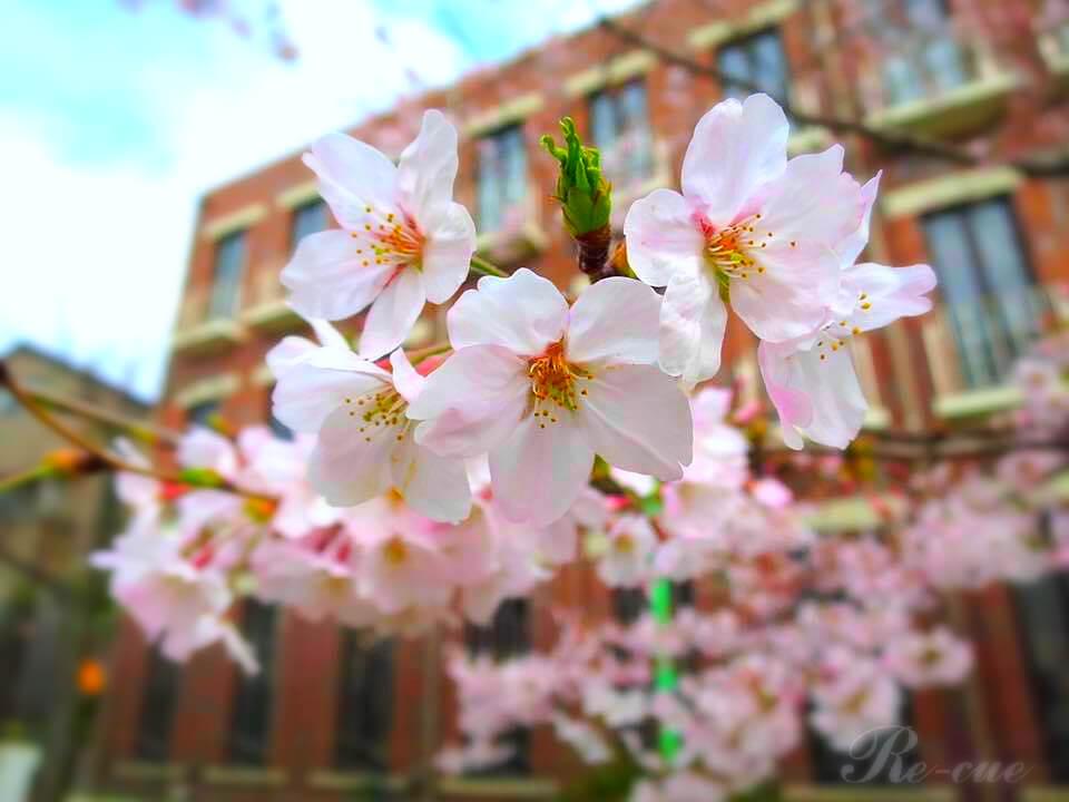 指先から春を感じる。桜の季節にオススメな桜ネイルデザインのポイントを解説