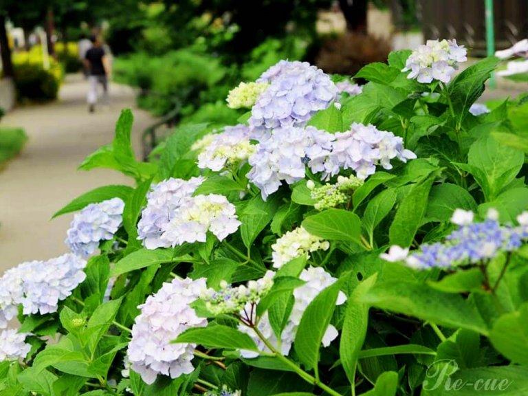 梅雨の楽しみ。紫陽花ネイルはいかが?