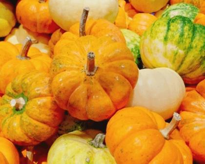 ペポかぼちゃの種に含まれる栄養とは?