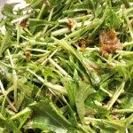 レタスサラダはもう飽きた!美容とダイエットにおすすめ♡「水菜とツナの和風サラダ♡」